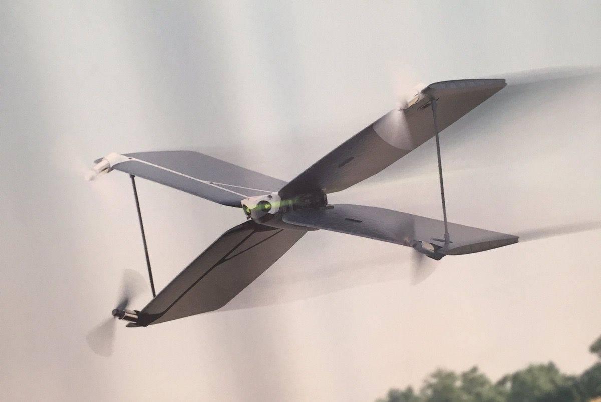 parrot-swing